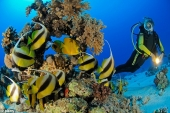 Scuba Diving in Phan Thiet - Mui Ne